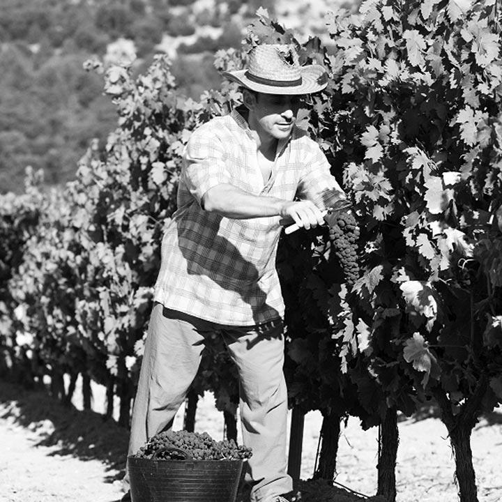 Tres generaciones de viticultores